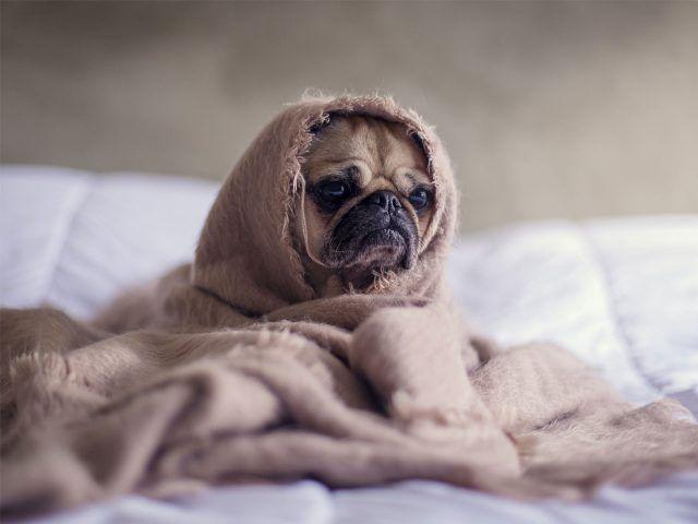 Perro después del baño