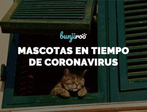 Mascotas en tiempos de coronavirus