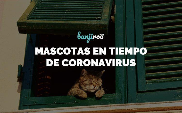 Coronavirus y mascotas: Lo que debes saber