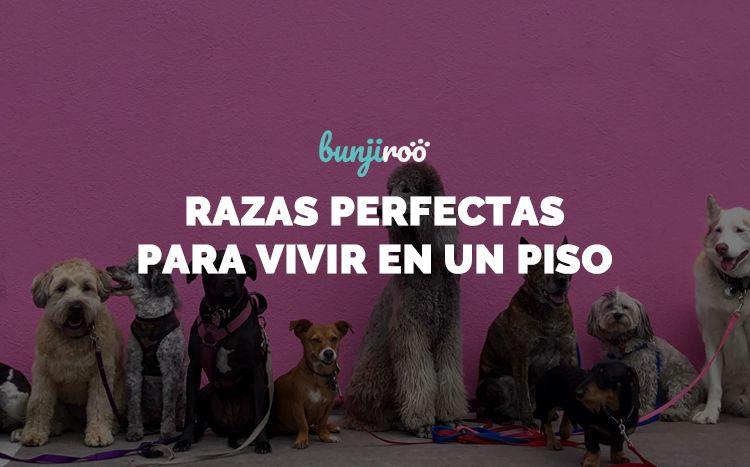 25 razas de perros para tener en un piso