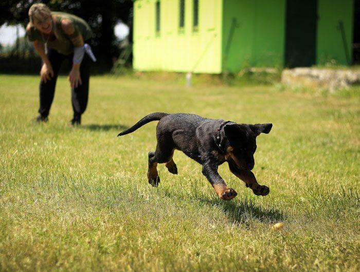 Rutina y adiestramiento perros cachorros