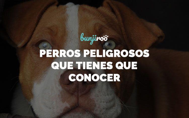 10 razas de perros peligrosos que debes conocer