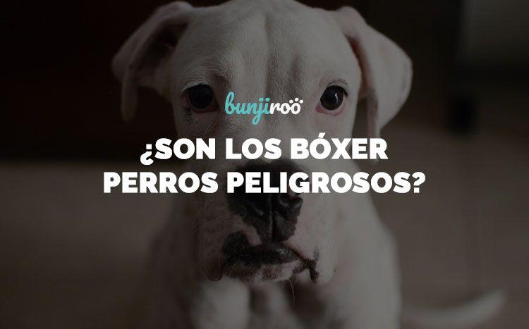 Perros boxer: todo lo que debes saber